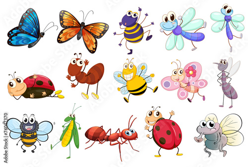 Insects - 76047370
