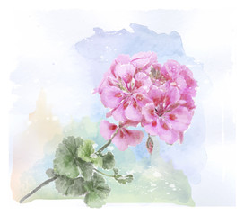 hand drawn  watercolor pink geranium flower