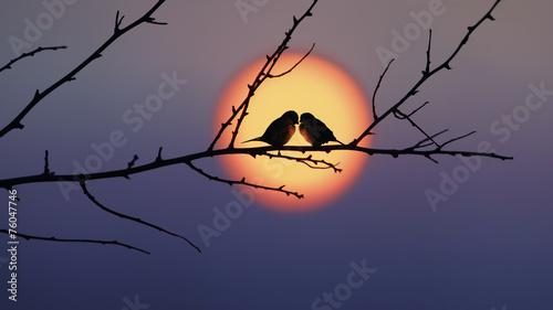 Fotobehang Vogel Love