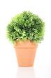 Flower pot green