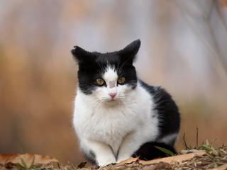 こっちを見る仔猫