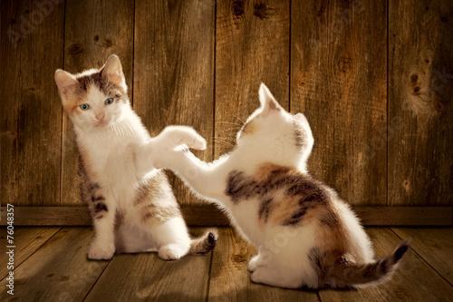 canvas print picture Katzen spielen