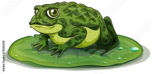 Frog - 76048369
