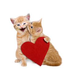 Katzen Liebe, Valentinstag