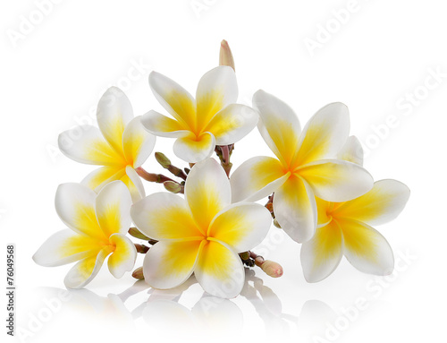Spoed canvasdoek 2cm dik Frangipani Frangipani flower isolated on white background