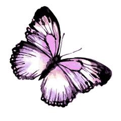 butterfly394