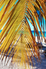 Tropical summer beach with palm leaf tree branch