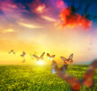 Colorful butterflies flying over spring meadow with flowers - 76054555