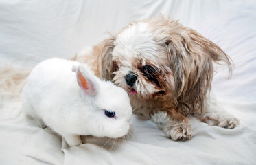 Dog and rabbit playing