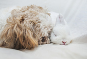 Dog and rabbit playing