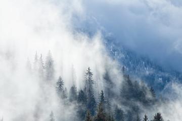 Foret dans le brouillard-Savoie