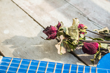roses and ukulele
