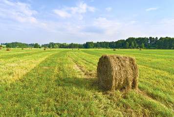 Haymaking.  Kaluga region of Central Russia
