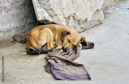 Fotobehang India Abandoned dog lying on the ground