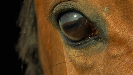 horse's eye in close up