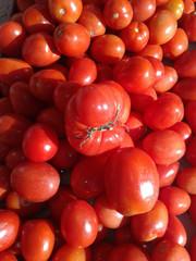 Tomates mezclados