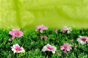 Blumenwiese, Osterwiese, Hintergrund