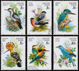 Stamps printed in Hungary show birds