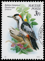 Stamp printed in Hungary shows the Syrian Woodpecker