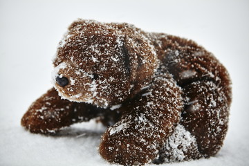 Teddy bear in snow storm