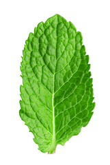 mint leaf isolated on the white background