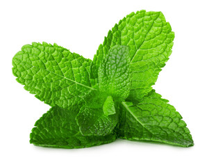 mint leaves isolated on the white background