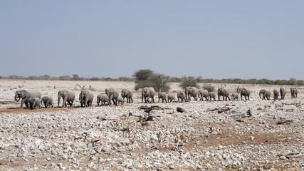 Elephants in Etosha National Park Namibia.