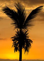 cocotier sur fond de soleil couchant