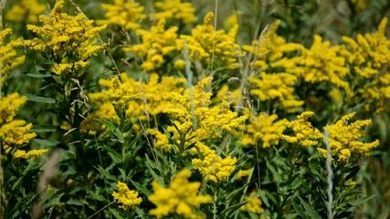 Wildflowers blowing in wind, HD video