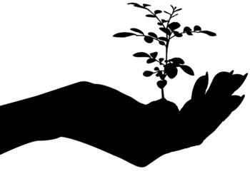 jeune plante dans une main féminine
