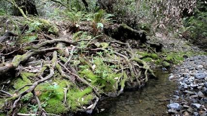 Gentle flowing water in stream in forest