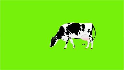 Dairy Cow.Fresh Milk.Dairy bio product.Animation