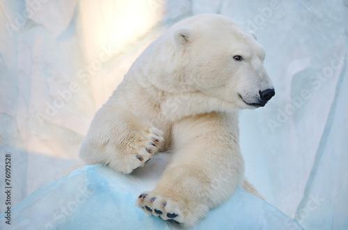 Foto op Canvas Ijsbeer Белый медведь.