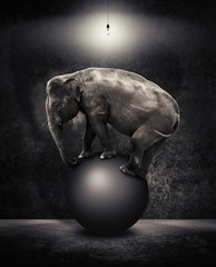 elephant balanced on ball