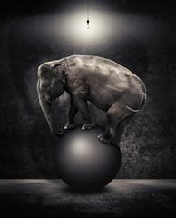 elephant balanced on ball