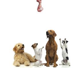 Wartende Hunde