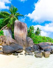 Exotic Beach Paradise