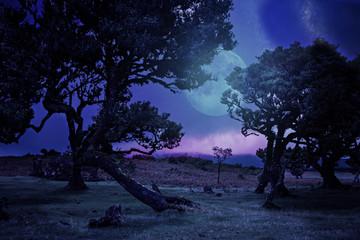 laurel tree by night