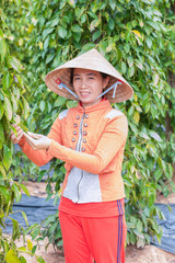 Plantation of pepper