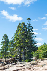 Green Spruce Trees on Rocky Slope