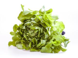 Bunch of fresh green sheet salad