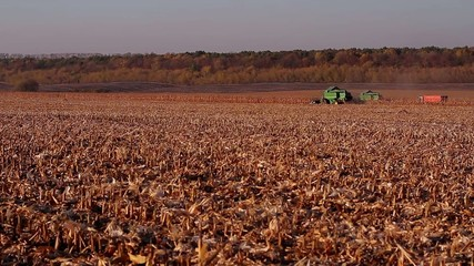 harvesters in motion harvesting corn