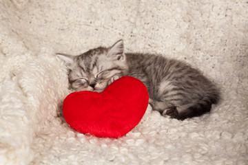 nice sleeping kitten and heart