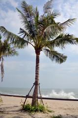 Coconut Palm tree on Hat Chao Samran beach at Morning