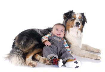 baby and australian shepherd