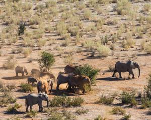 Elephant Family in the Desert, Etosha, Namibia