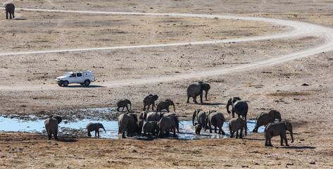 Elephant Family at Dolomite Waterhole, Etosha, Namibia