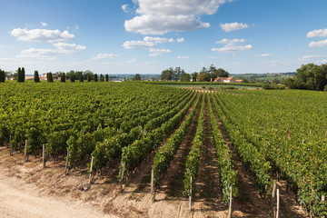 Vineyards of Saint Emilion, Bordeaux