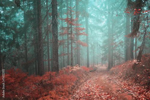 lesna-bajkowa-droga
