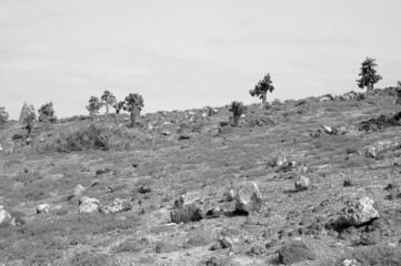 Rocky terrain in the Galapagos Islands